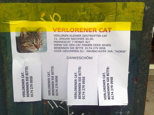 Verlorener Cat